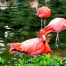 Flamingos by Dan Shiels
