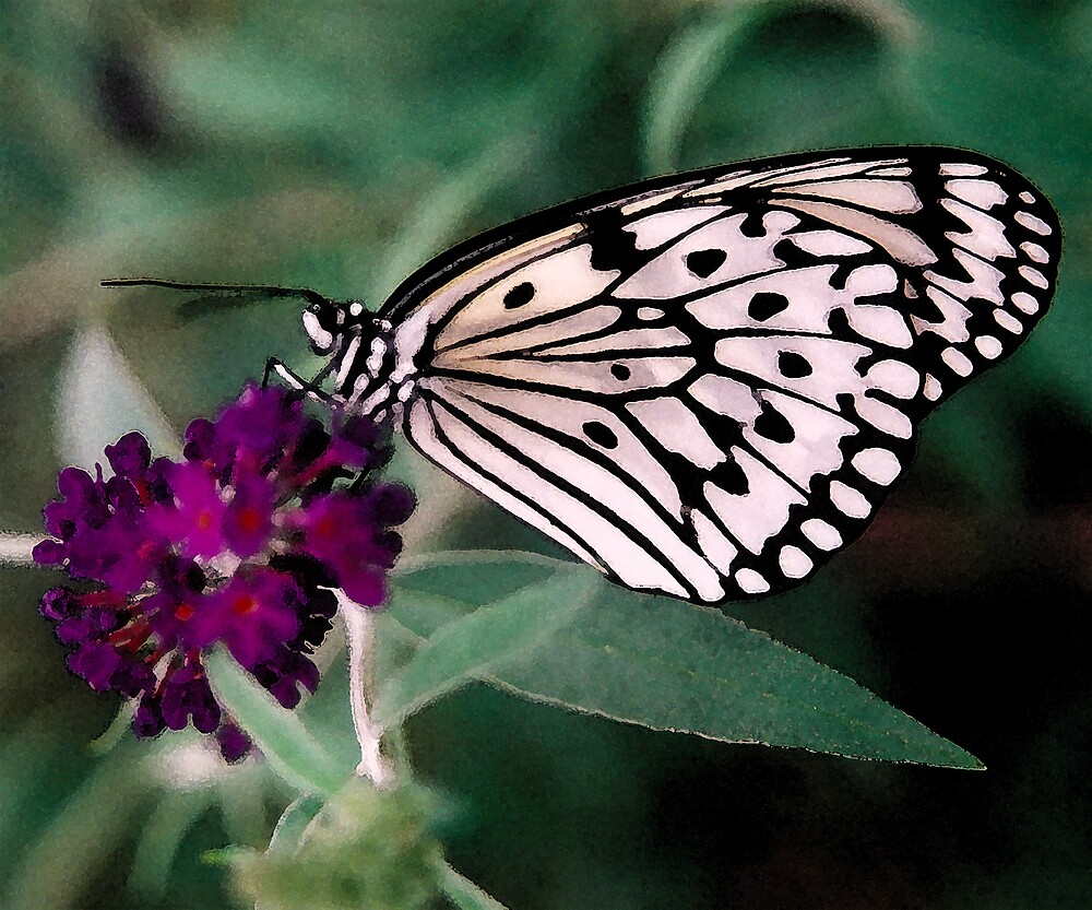Paper Kite by rachelbee
