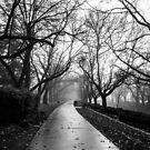 Winter by Joel Bramley