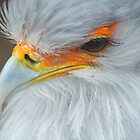 Feathers and eyelashes by vfphoto