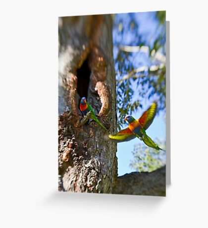 Rainbow Lorikeets - Sydney - Australia Greeting Card