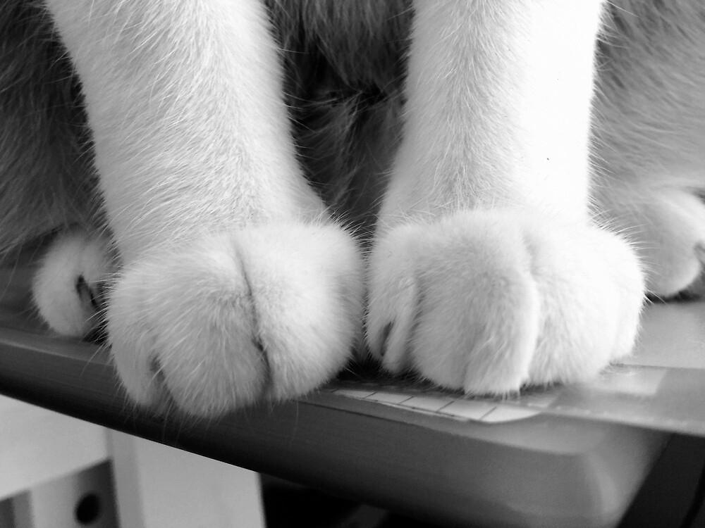 White cat paws by Giada De lazzaro