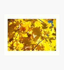 Autumn in Everglades Art Print