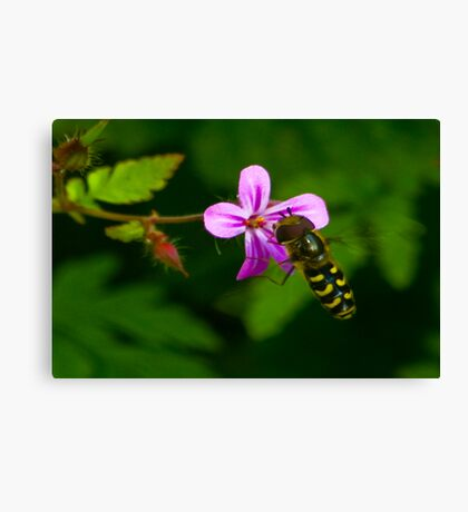 Hoverfly #1 Canvas Print