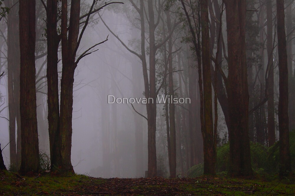 Covens court by Donovan Wilson