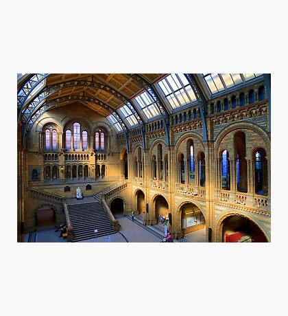 Natural History Museum - A Different Side - London Photographic Print