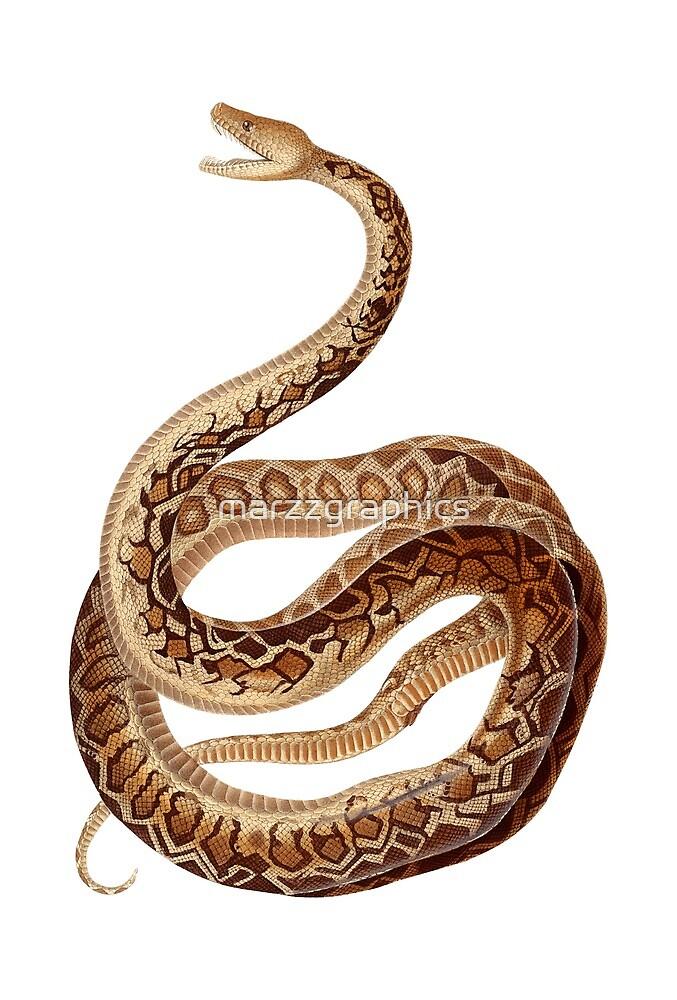 Cuban Boa, Cuban Tree Boa, Chilabothrus, Epicrates Angulifer, Animal, Boa, Cuba, Cuban, Reptile, Snake by marzzgraphics
