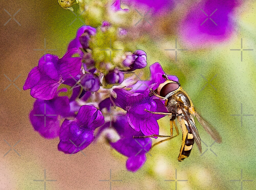 Hoverfly on Linaria by Geoff Carpenter
