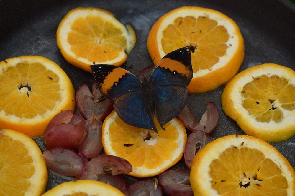 Butterfly and Oranges by alvaros