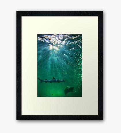 Predators! Sydney Aquarium - Australia Framed Print