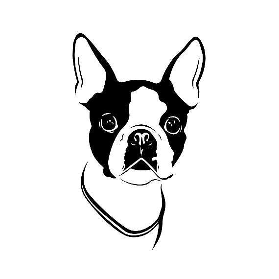 Boston Terrier by LilyCateE