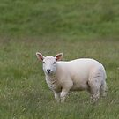 I love EWE! by Teuchter