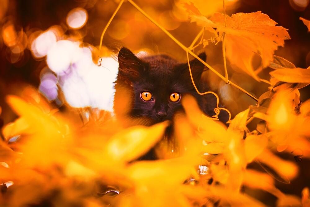 Black kitten in fall foliage by szczerbiec