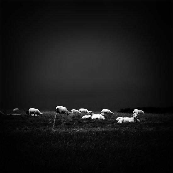 ... by Didi Bingham