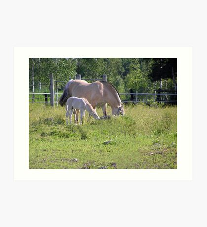 Fjord horse with foal Art Print