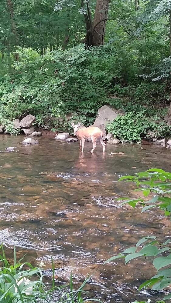 deer by brianaheartsyu