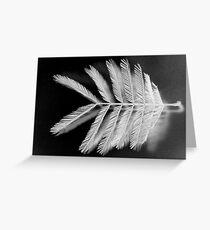 acacia mearnsii black wattle 6 Greeting Card