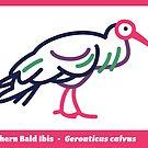 Southern Bald Ibis by David Orr