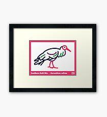 Southern Bald Ibis Framed Print