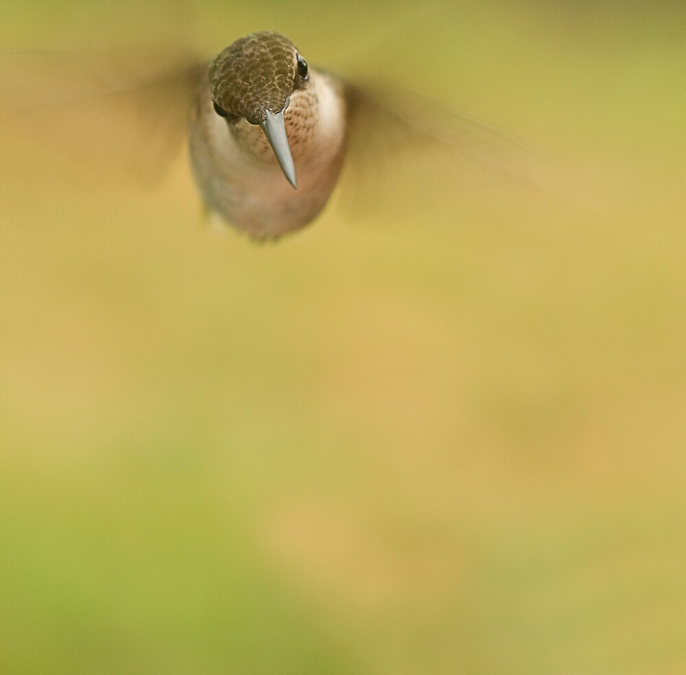 In Flight! by Trudy Wilkerson
