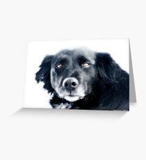 RIP sweet Crowe Bird Greeting Card