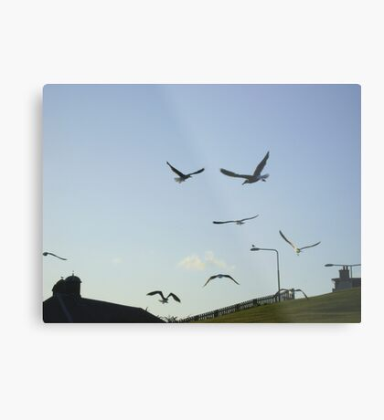 the gulls are in town ! Metal Print