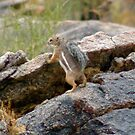 Chipmunk wonder !  by Bonnie Pelton