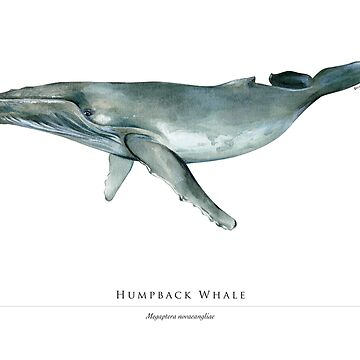 Humpback whale by RedCloudDesign