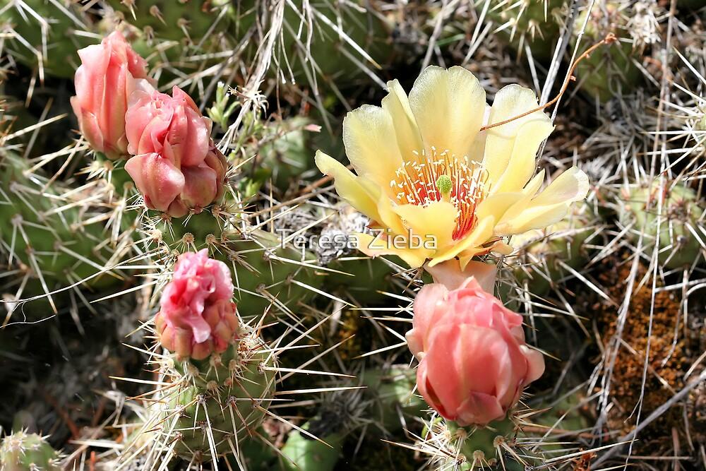 Prickly Pear Cactus by Teresa Zieba