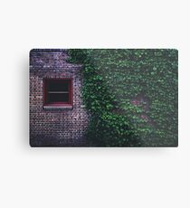 Texture Brick wall red bricks with climbing green vines wild plants and rustic red wooden window vintage grunge style urban pattern Metal Print