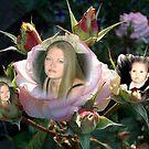 DEAREST FRIEND by Nancy Shields