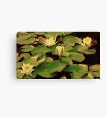 Water Lilies at Sunrise Canvas Print