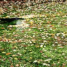 Mallard Duck on leaf strewn pond photograph by Vic Potter by Vic Potter