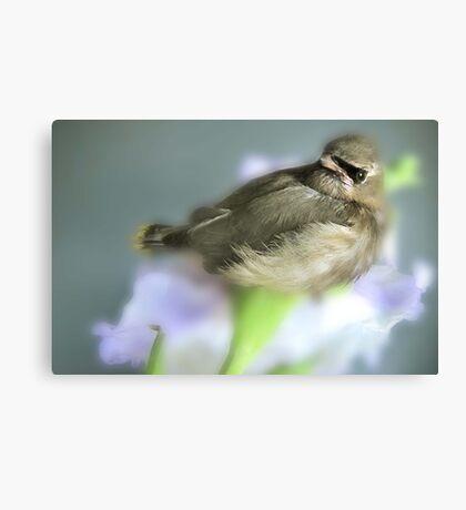 CEDER WAXWING BIRD Canvas Print