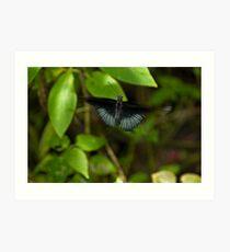 The Great Mormon Swallowtail Art Print