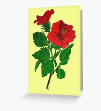 A Tropical Red Hibiscus Flower Isolated Greeting Card