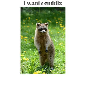 Raccoon , I wantz cuddlz  t-shirt by cooltdesigns