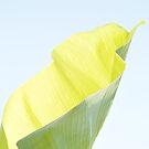 «Hoja de plátano luminosa» de by-jwp