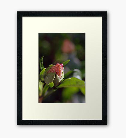 Bud Light Framed Print