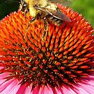 Bzzzz by Laura S