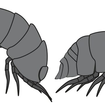 isopods by superflygeckos