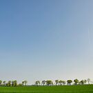 Spring morning in the countryside by gnubier