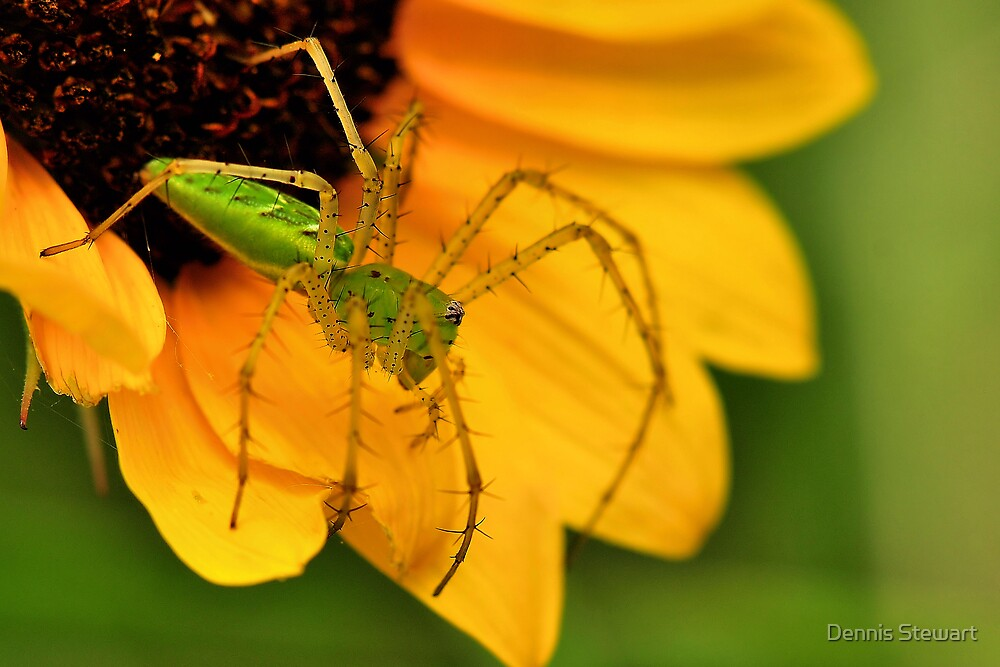 Green Lynx Spider Sequel by Dennis Stewart