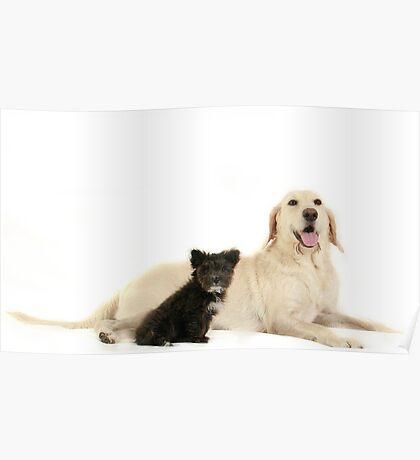 Abby & Smokey Poster