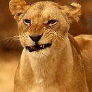 Lioness Part 2 by HeatherEllis