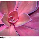 pink succulent by FUSIONART