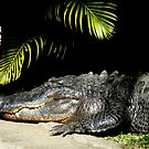 Happy Croc by Shannon McLean