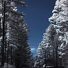 Infrared Road And Trees by L.D. Franklin