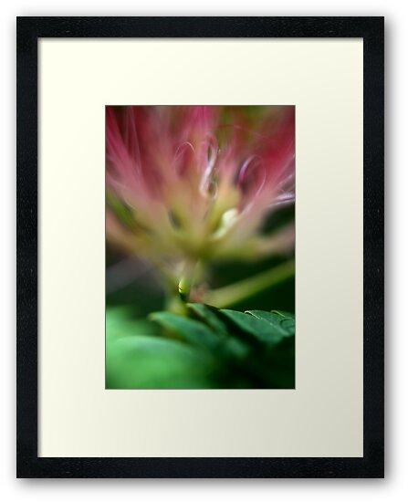 Silk Flower by HeatherEllis