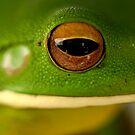 Tree Frog by HeatherEllis